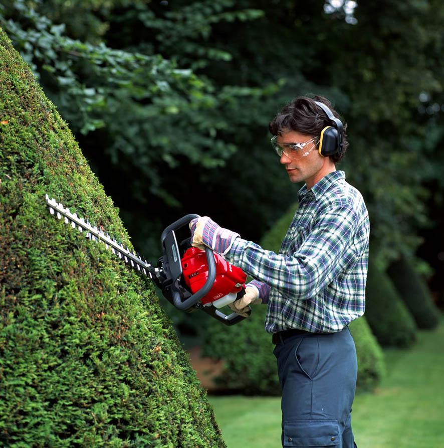 Бензиновый кусторез в работе. Второе название садовые ножницы.